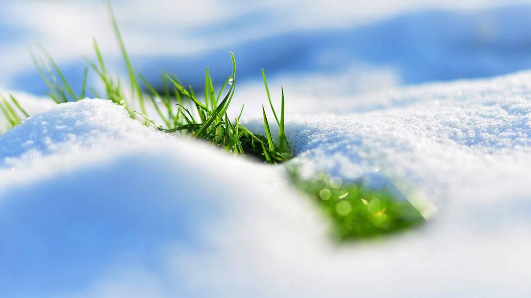 雪の中から顔を出す草の綺麗な写真壁紙画像