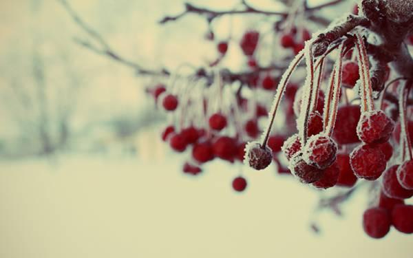 05.雪の積もったサクランボを撮影した綺麗な写真壁紙画像