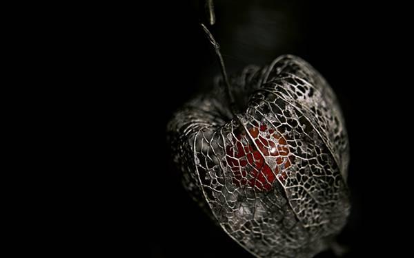 09.枯れた殻の中のさくらんぼを撮影したかっこいい写真壁紙画像
