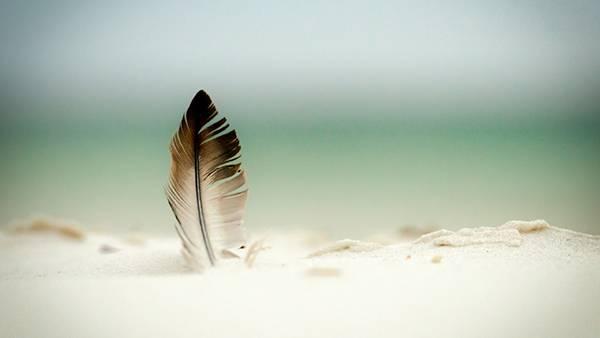 03.白い砂浜に立てられた羽を撮影した爽やかな写真壁紙画像