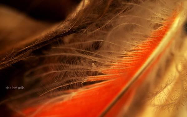 05.羽毛をマクロ撮影した綺麗な写真壁紙画像
