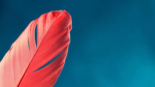 08.赤い羽をアップで撮影した綺麗な写真壁紙画像