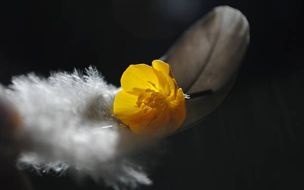 11.羽毛と花を撮影した綺麗な写真壁紙画像