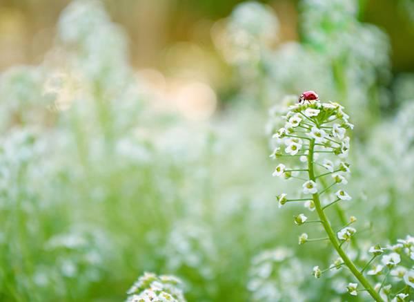 02.花の上のてんとう虫を撮影した綺麗な写真壁紙画像
