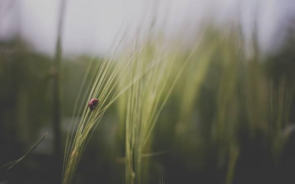 03.草の上のてんとう虫をくすんだ色合いで撮影したオシャレな写真壁紙画像