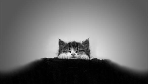 毛布にくるまる猫のおしゃれなモノクロ・白黒写真の壁紙