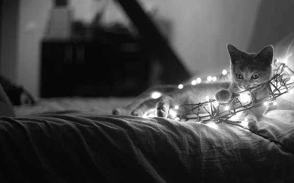 02.電飾のついた飾りで遊ぶ猫をモノクロで撮影した綺麗な写真壁紙画像