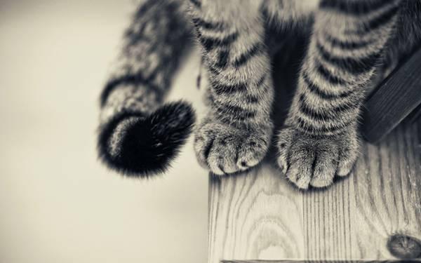 03.行儀よく両足を揃えて座った子猫の足元を撮影した可愛い写真壁紙画像