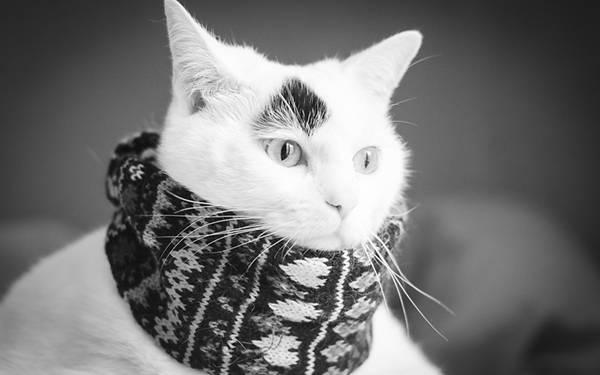 04.ネックウォーマーをした猫を撮影したカッコイイ写真壁紙画像
