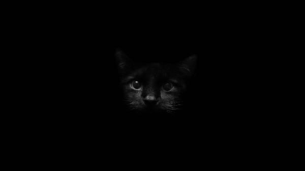05.真っ暗な背景の中の黒猫を撮影した可愛い写真壁紙画像