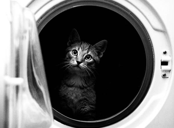06.洗濯乾燥機の中からこっちを覗く猫を撮影した写真壁紙画像