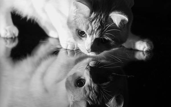 07.反射する床の上の猫をモノクロで撮影した写真壁紙画像