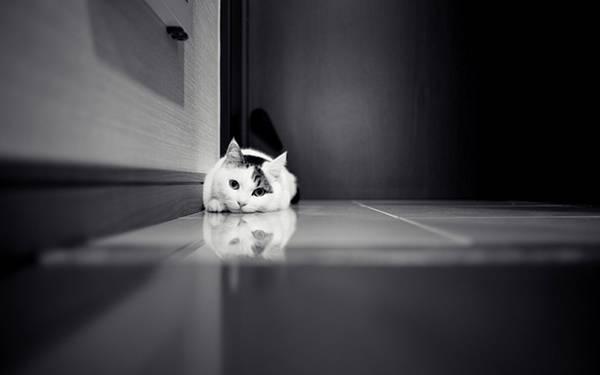 08.床に伏せてこっちを見つめる猫をモノクロで撮影した綺麗な写真壁紙画像