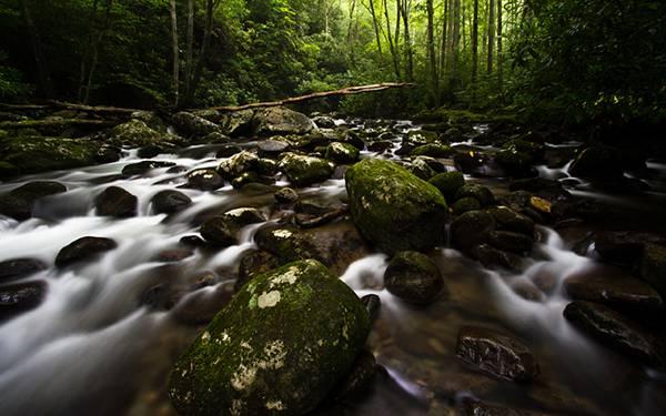 05.深い森の渓流を長時間露光で撮影したきれいな写真壁紙画像
