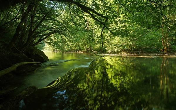 森の木々が反射する渓流を撮影した美しい写真壁紙画像