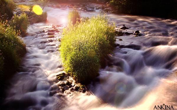 11.長い草の生えた渓流をレンズフレアを入れて撮影した綺麗な写真壁紙画像