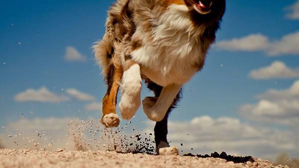 02.砂を巻き上げて走る犬の足元を撮影したかっこいい写真壁紙画像