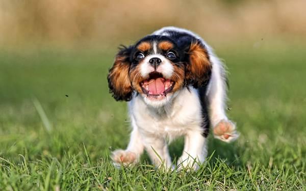 04.大はしゃぎで草の上を走る犬の可愛い写真壁紙画像