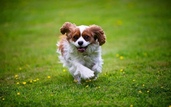 07.原っぱを楽しそうに走る仔犬を撮影した可愛い写真壁紙画像