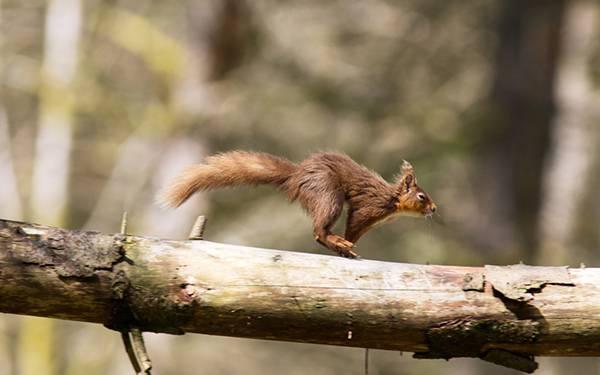 09.木の枝の上を勢いよく走るリスの可愛い写真壁紙画像