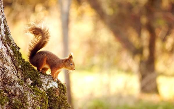 07.木の上に座ったフサフサのしっぽのリスを撮影した綺麗な写真壁紙画像