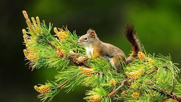 09.木の枝に登ったリスを撮影した綺麗な写真壁紙画像