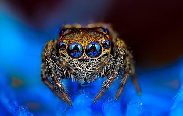 クモの目を超接写撮影した写真作品シリーズ - 01