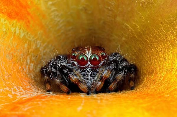 クモの目を超接写撮影した写真作品シリーズ - 02