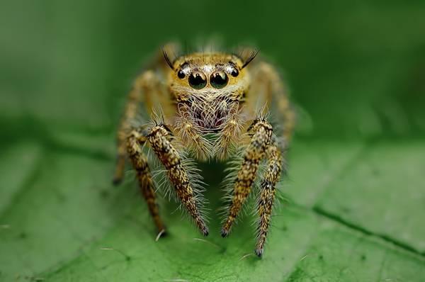 クモの目を超接写撮影した写真作品シリーズ - 03