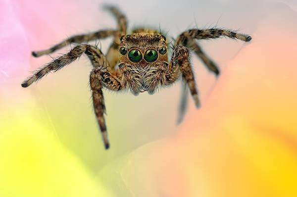 クモの目を超接写撮影した写真作品シリーズ - 04
