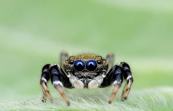 クモの目を超接写撮影した写真作品シリーズ - 05