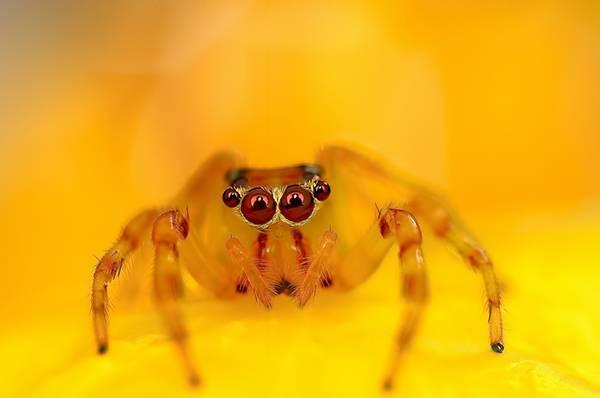 クモの目を超接写撮影した写真作品シリーズ - 06