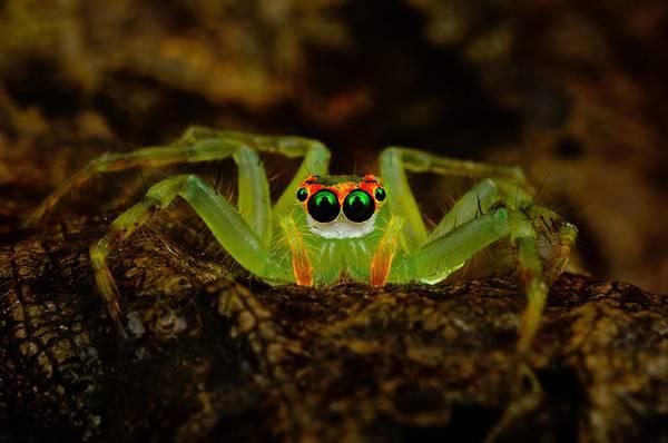 クモの目を超接写撮影した写真作品シリーズ - 07