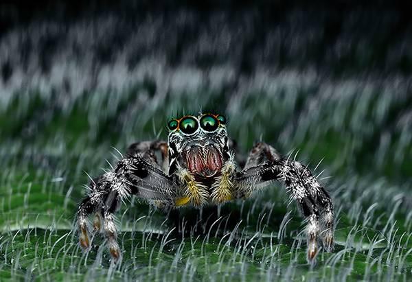 クモの目を超接写撮影した写真作品シリーズ - 08
