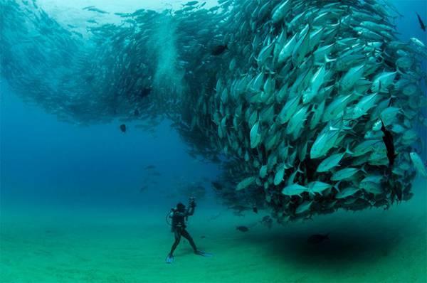 無数の魚達が竜巻のように押し寄せる…!壮絶すぎる水中写真作品 - 01