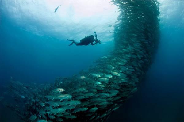 無数の魚達が竜巻のように押し寄せる…!壮絶すぎる水中写真作品 - 02