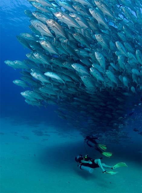 無数の魚達が竜巻のように押し寄せる…!壮絶すぎる水中写真作品 - 03