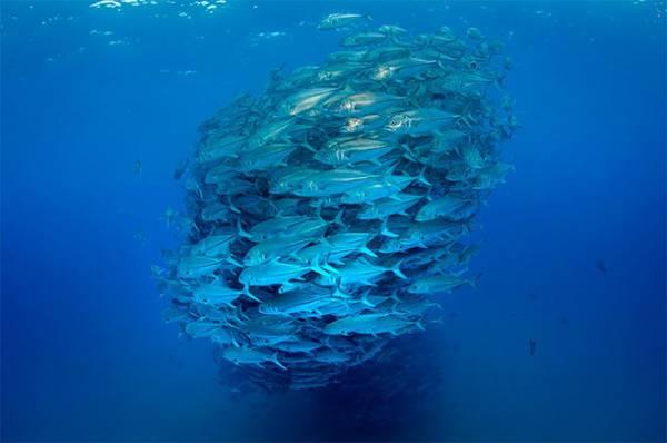 無数の魚達が竜巻のように押し寄せる…!壮絶すぎる水中写真作品 - 04