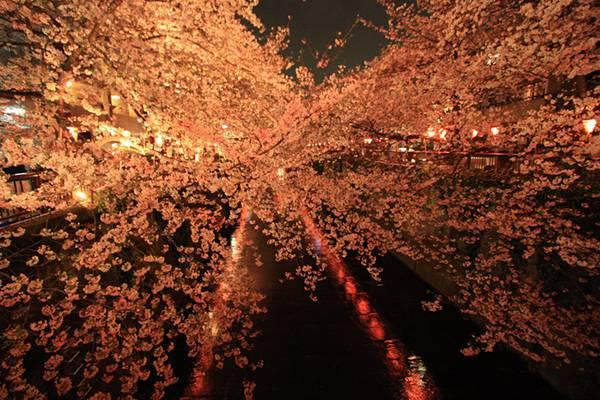 目黒川桜並木の写真素材