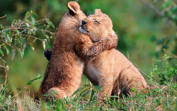- Tight hug wallpaper ...