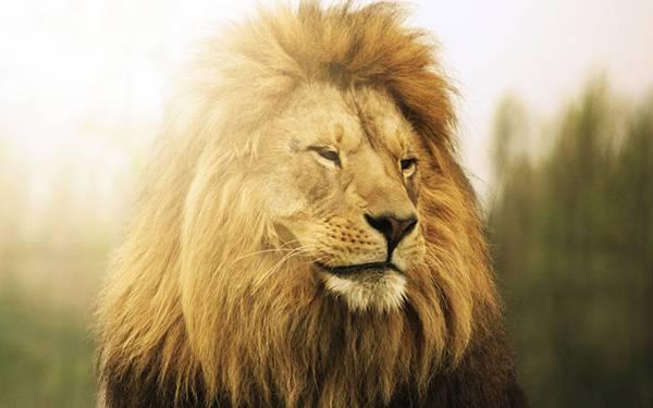 01.光の中のライオンを撮影したカッコイイ写真壁紙画像