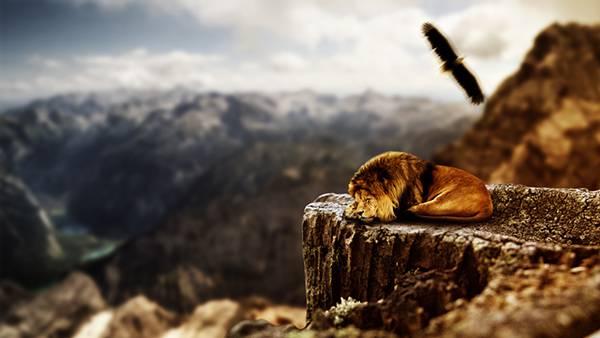 03.崖の上で眠るライオンを撮影した美しい写真壁紙画像