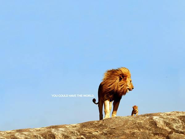 09.青空とライオンの親子を撮影したカッコイイ写真壁紙画像