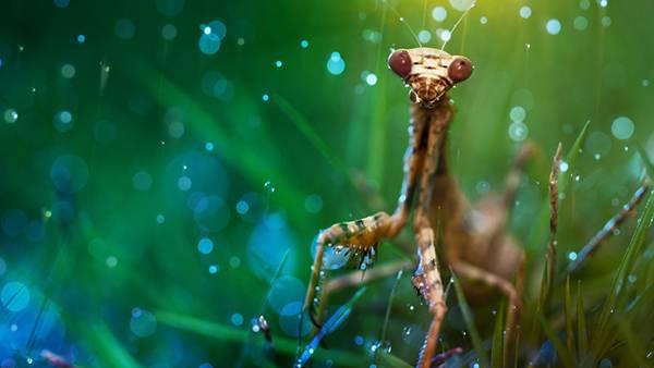 01.キラキラ輝く玉ボケの中のカマキリを撮影した綺麗な写真壁紙画像