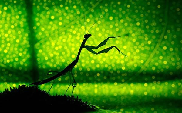 08.葉っぱをバックにカマキリのシルエットを撮影した鮮やかな写真壁紙画像