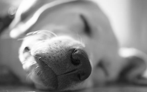 犬 食欲 が ない 寝 て ばかり