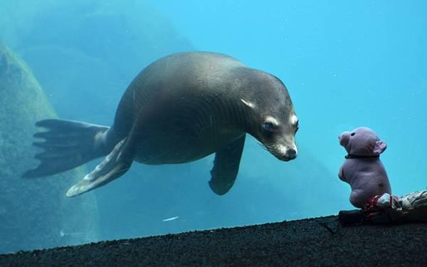 11.水族館の水槽のアシカとくまのぬいぐるの可愛い写真壁紙画像