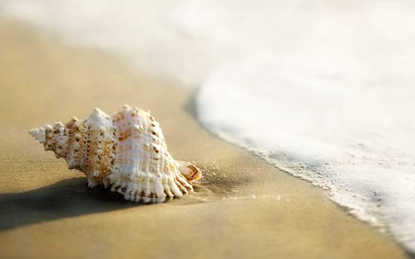 01.波打ち際の巻貝を撮影した綺麗な写真壁紙画像