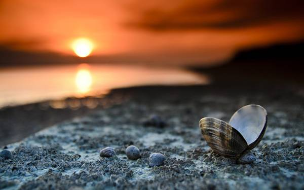 02.夕日の海岸と二枚貝を撮影した美しい写真壁紙画像