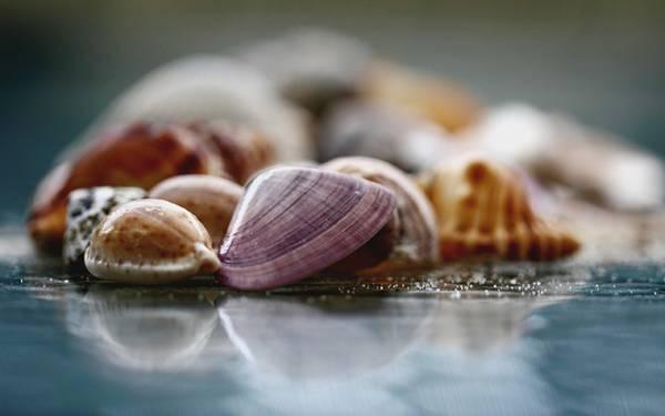 04.色んな種類の貝殻を集めて浅い被写界深度で撮影した綺麗な写真壁紙画像
